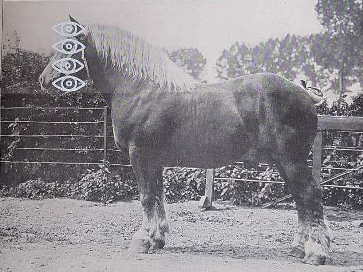 Stallionseye nr 2
